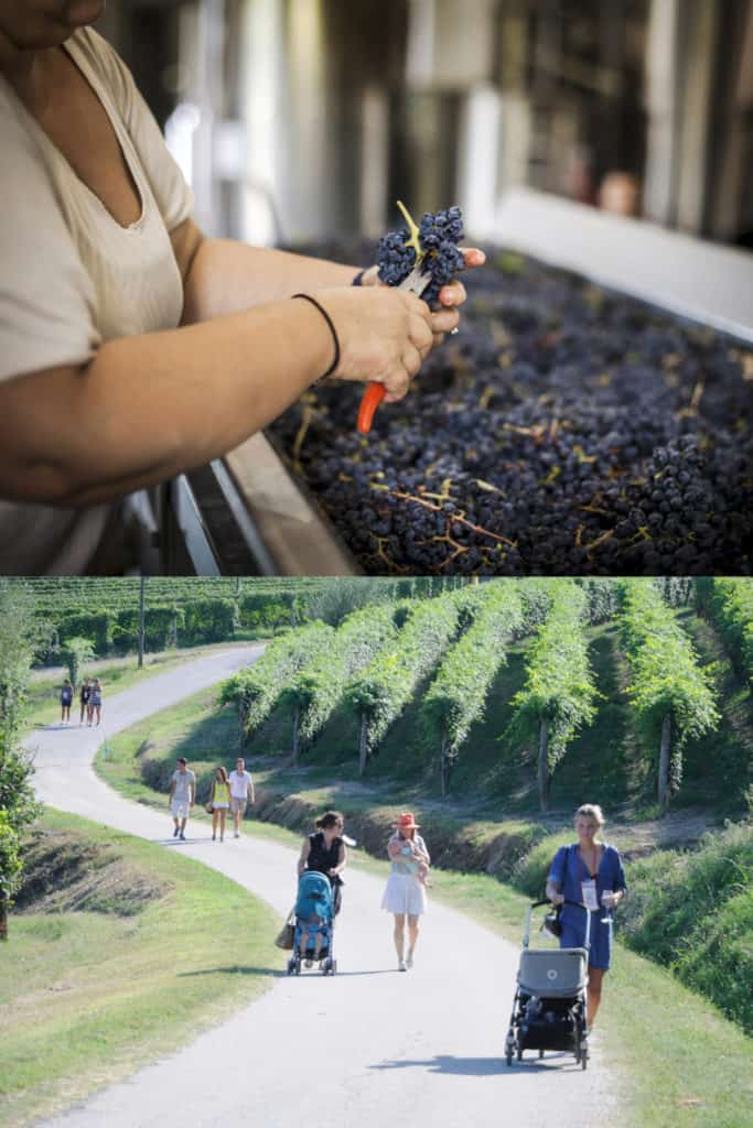 Wine walk tour Nizza Monferrato
